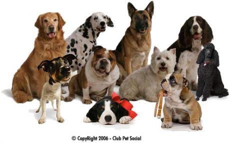 Ficheiro:Cães.jpg