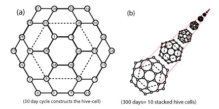 File:Hive-cell-stacking.jpg