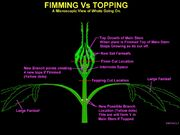 Fimming v topping