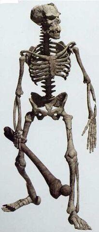 File:Rendered Skeleton.JPG