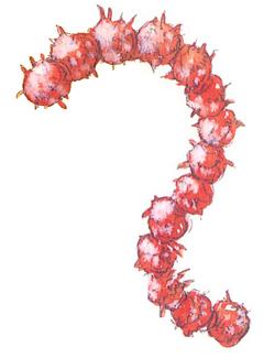 Larva - 01