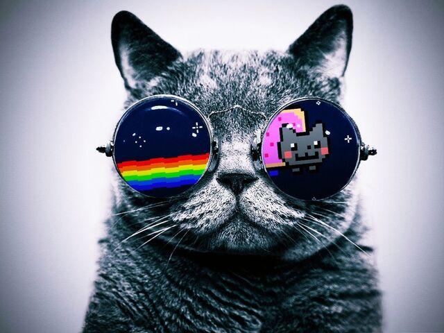 File:Gato-gafas-nyan-cat.jpg