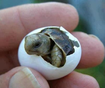 File:Tiny turtle.jpg