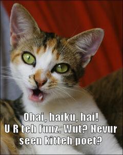 Haiku cat