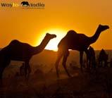 File:Thumb Rajasthan-Desert-Tour.jpg