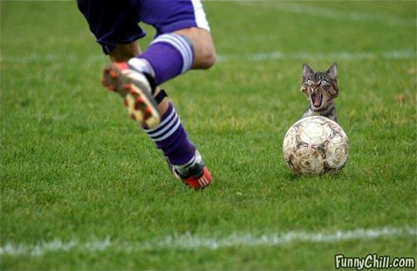 File:Catball.jpg