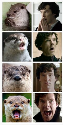 File:Otters-Who-Look-Like-Benedict-Cumberbatch1.jpg