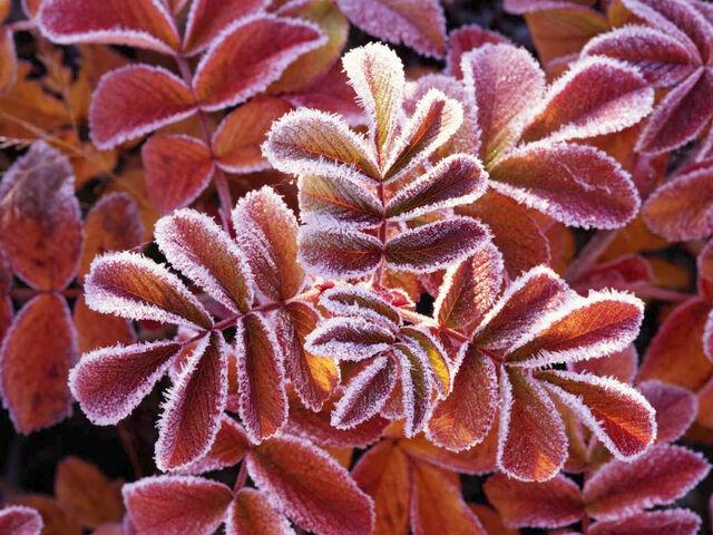 File:Winter Leaves.jpg