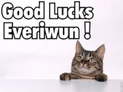 Good luck everiwun