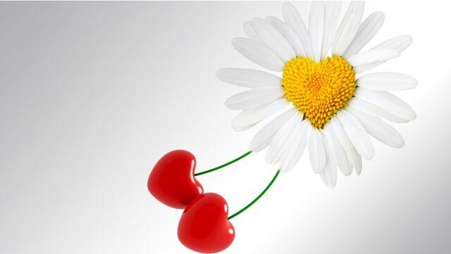 File:Sun-flower-852x480.jpg