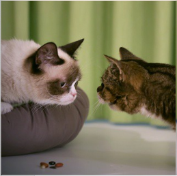 File:Bub and gumpy.png