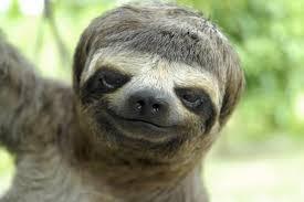 File:Sloth.jpg