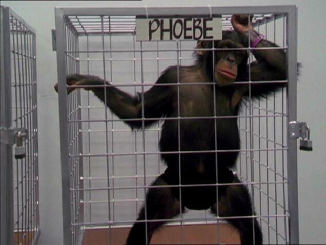 File:MonkeyPhoebe.jpg