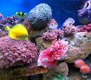 Sea-life Manipulation
