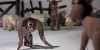 Nestor, the Long-Eared Christmas Donkey (song)