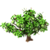 Atemoya Tree-icon