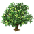 WhiteSapote Tree-icon