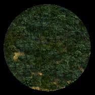 File:Jungle (Civ5).png