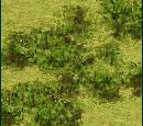 Forest (Civ3)