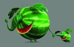 Mkt014 5 watermelos lm v4 cmyk-thumb-300x191-15867