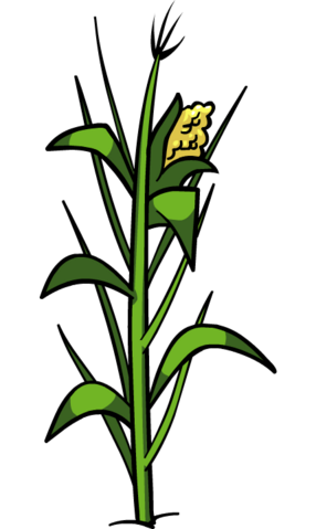 File:Corn Plant.png
