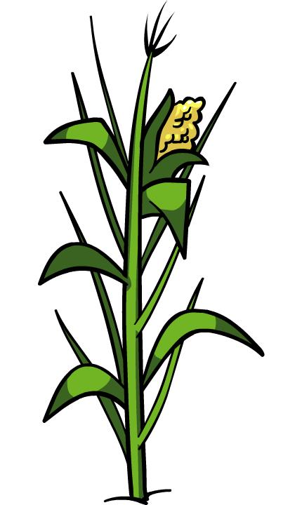 image corn plant png club penguin wiki fandom corn stalk clipart free 1200 x 1200 corn stalk clipart panda