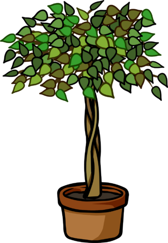 File:Ficus Plant.PNG