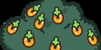 Large Multi-berry Bush