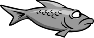 Grey fish swimming