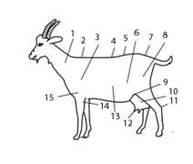 Anatomie chèvre