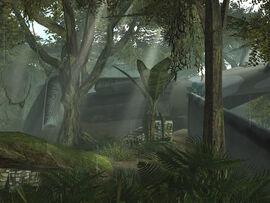 Brushwood1