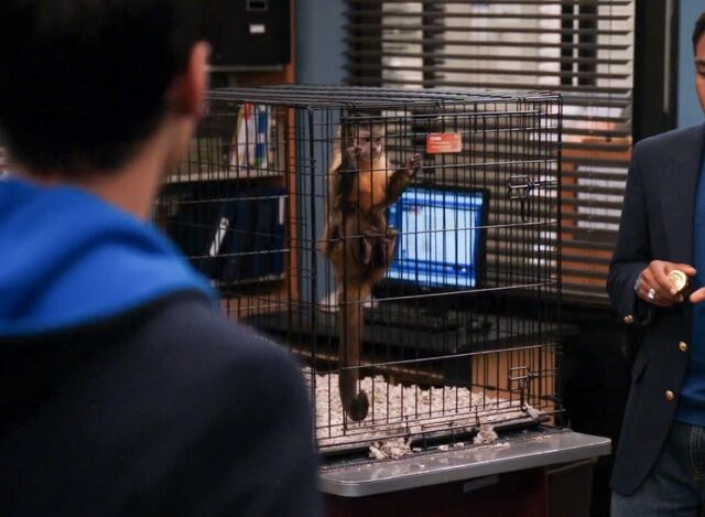 File:Monkey cage 1.jpg