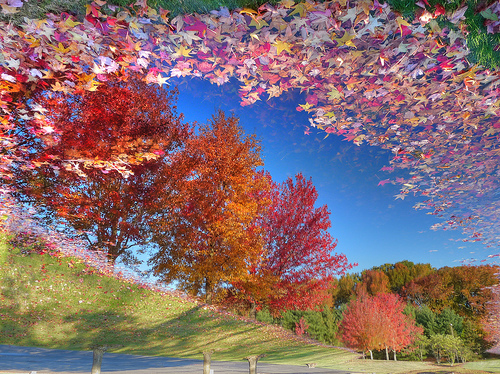 File:Reflecting on the change of seasons - NJ.jpg