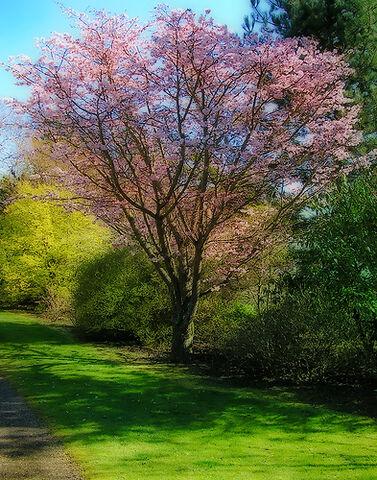 File:Spring tree.jpg