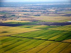 Sacramento rice fields