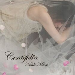 Centifolia-Noriko Mitose