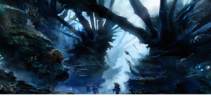 Rakkuna rainforest
