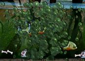 C3 Piranha Meal