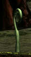 Fern Fiddlehead
