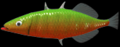 C3stickletrout.png