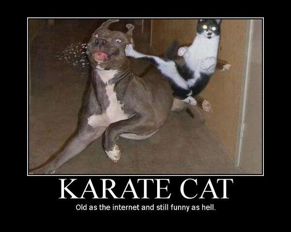 File:Karate cat.jpg
