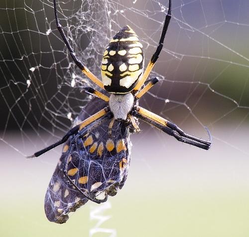 File:Phobia-butterdead.jpg
