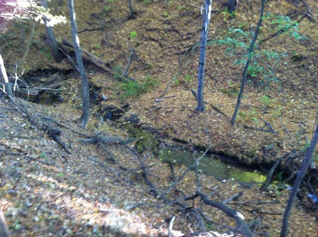File:The bottom of the ravine.jpg