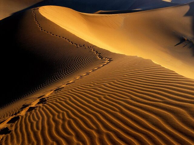 File:Sanddune.jpg