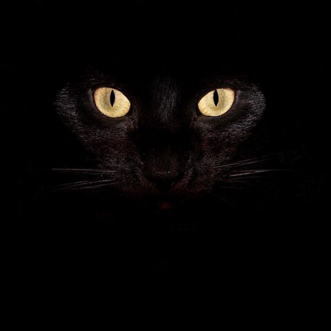File:Evil cat .jpg
