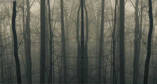 File:Creepy woods3.jpg