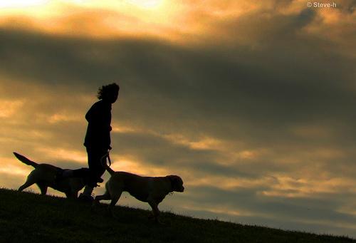 File:Walking the dogs.jpg