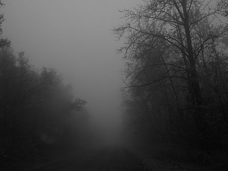 File:Woods2 for creepypasta.jpg