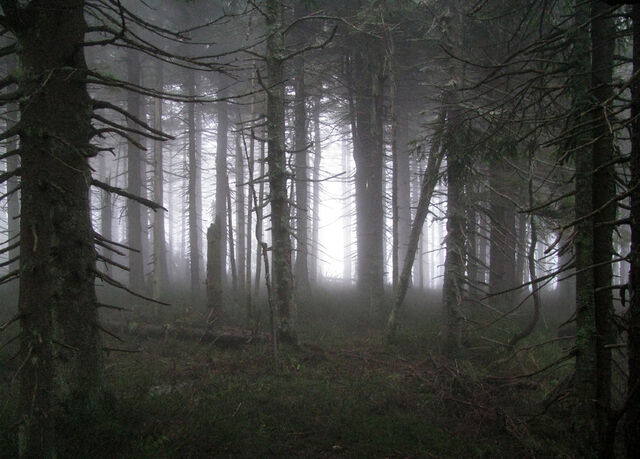 File:Spooky forest by ktostam.jpg