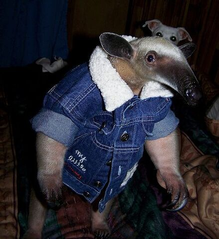 File:Anteater-coat.jpg